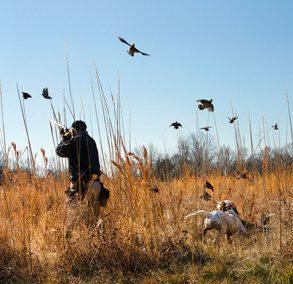 Prairie Wildlife Web